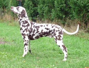 Charly Brown vom Gut Nordholz