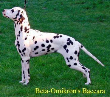 Beta-Omikrons Baccara